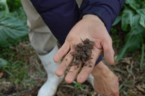 丸々とした粒が混じる土。ふっくらと湿り、いい匂いがした。