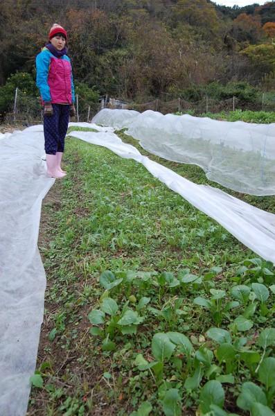 野菜の葉をその場で千切って食べさせてくれた。普段も畑でそのまま、よくかじるそう。