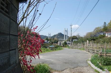 sashima